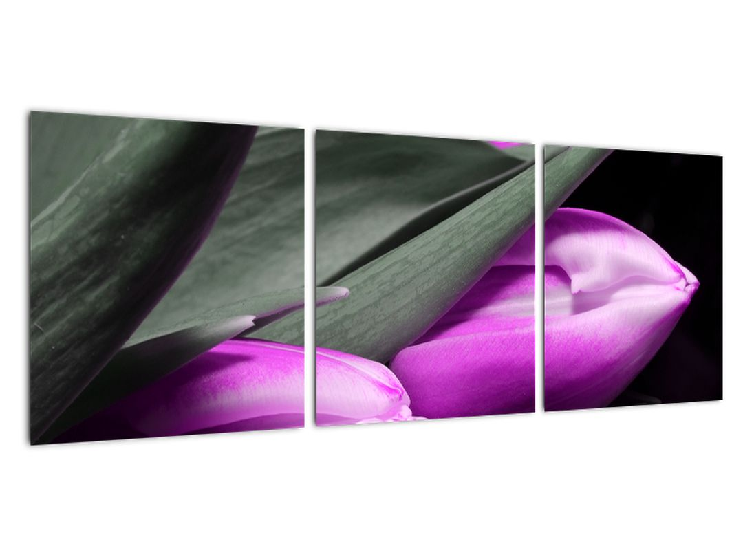 Obraz fialových tulipánov