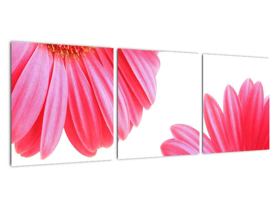 Obraz kvetín - astra