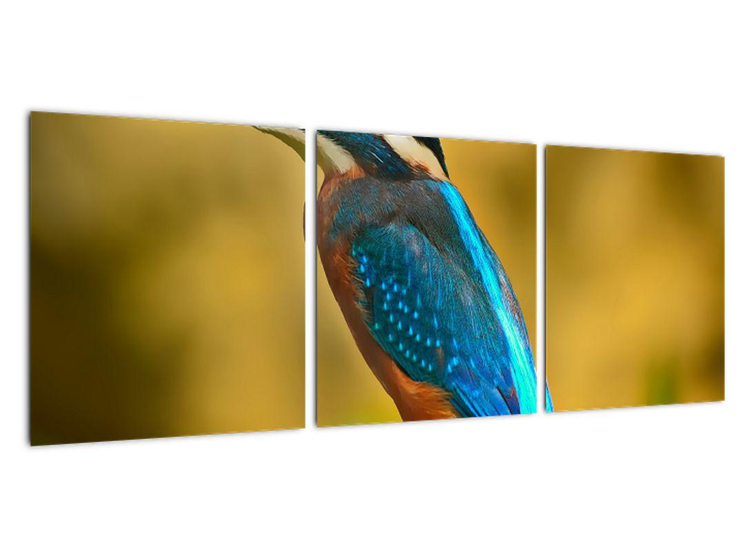 Obraz - farebný vták