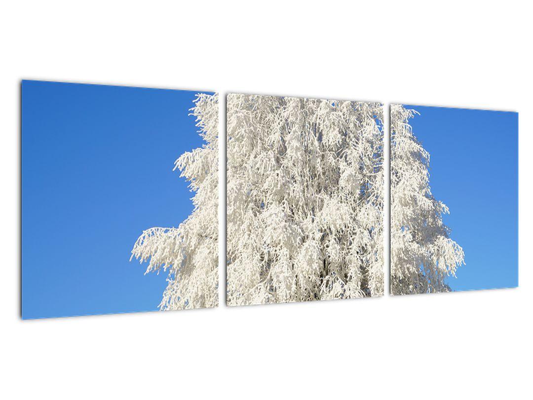 Zasnežený strom - obraz
