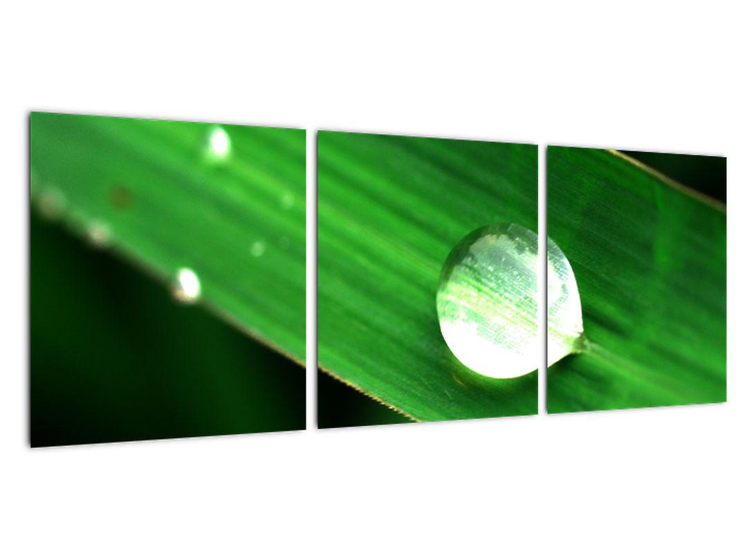 Obraz prírody - makrá