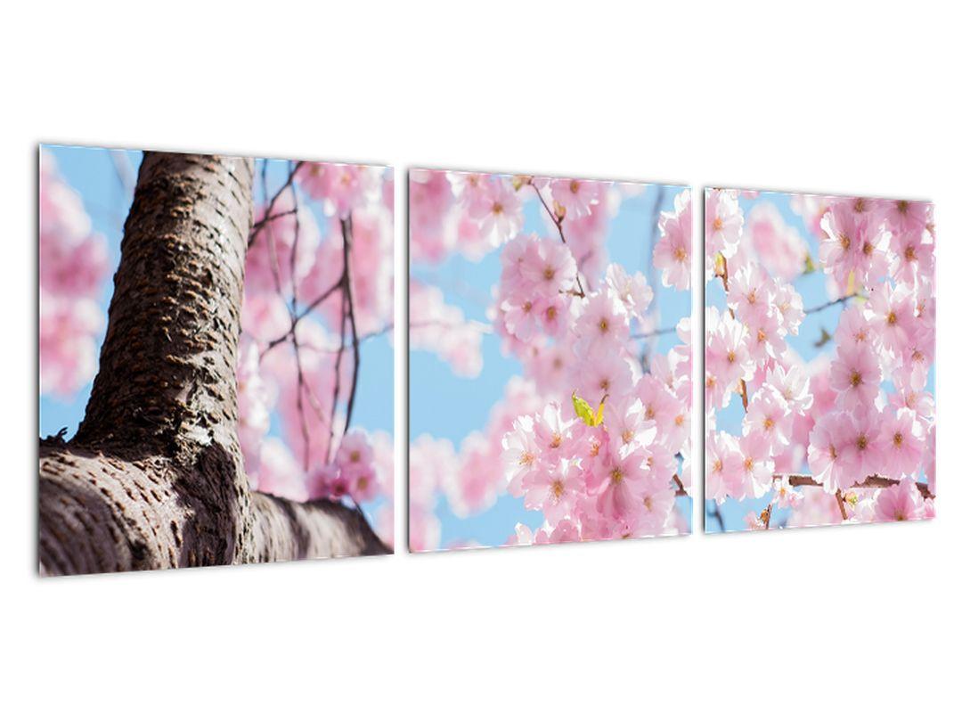 Kvitnúce strom - obraz