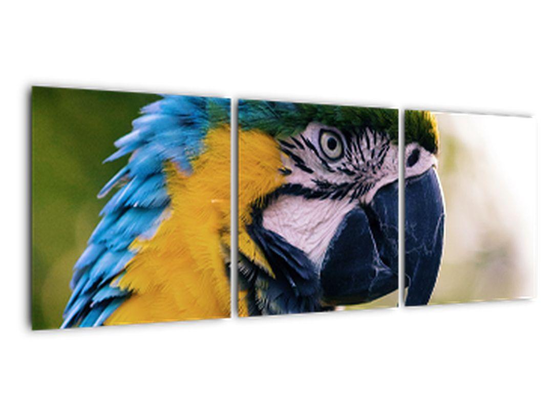 Obraz - papagáj
